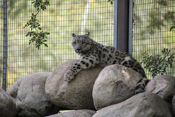In de dag Luipaard leopard laying on rocks