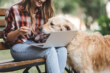 Wall Mural - cropped view of girl in casual clothes using laptop while golden retriever disturbing woman
