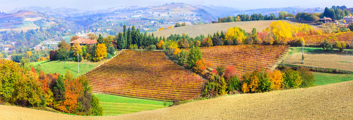 beauty in nature - autumn countryside with rows of colorful vineyards in Piedmont, northen Italy