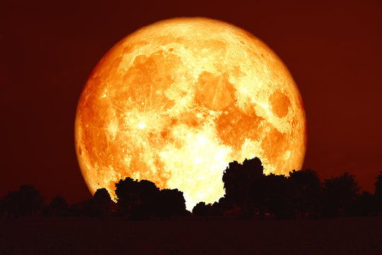 full harvest blood moon on red sky and silhouette trees
