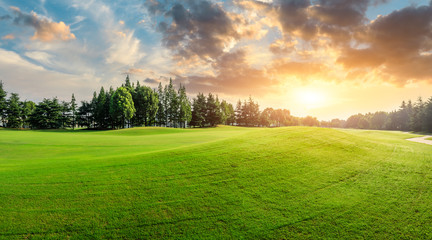 Green grass and forest with beautiful clouds at sunset