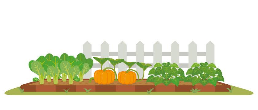 菜園 秋の野菜
