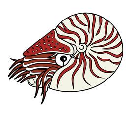 オウムガイ 深海魚 キャラクター イラスト