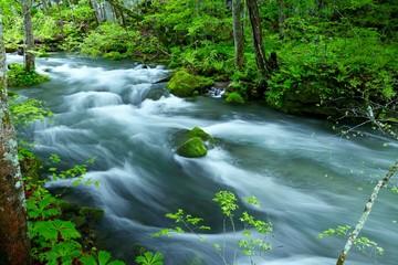 Foto op Canvas 《新緑の奥入瀬渓流》青森県十和田市