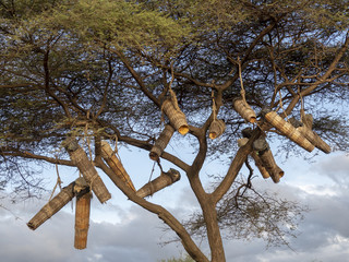 The natives make beehives and hang them on trees, Ethiopia