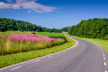 In de dag Lavendel Beautiful asphalt road with flowers and trees in the background. Typical road in Estonia.