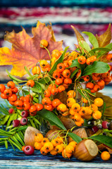 autumnal fruits and plants background