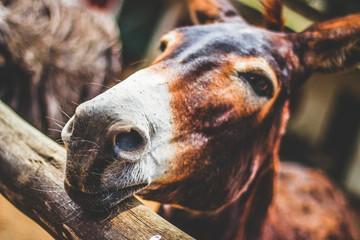 Close up of donkey head