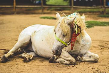 Sad Unicorn lying in the sand