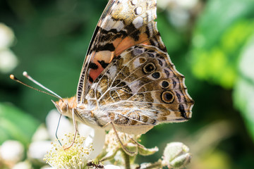 colorful butterfly perched on flower