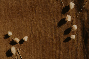 Dry flowers on dark brown background. Flat lay, top view minimal neutral floral composition. Copy...