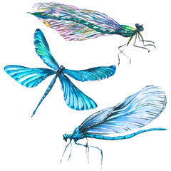 Foto op Canvas Surrealisme Exotic dragonfly wild insect. Watercolor background illustration set. Isolated dragonfly illustration element.