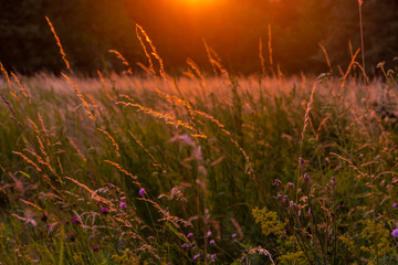 Fantastic sunset on the flowering meadow