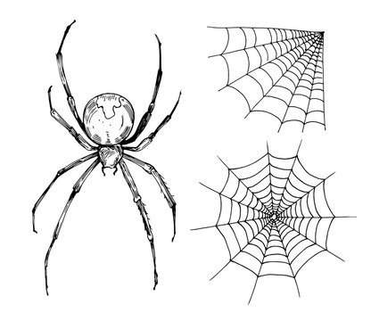 Sketch of spider web. Hand drawn outline with transperent background