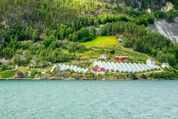 Norwegian agricultural farm with greenhouses on the hill at Naeroy fjord,  Aurlan, Sogn og Fjordane county, Norway