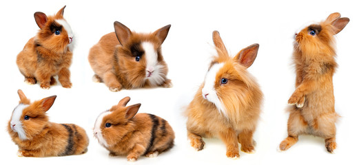 little baby rabbit collection