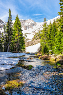 Pine trees and alpine river water on Thomas Lakes Hike in Mt Sopris, Carbondale, Colorado in early 2019 summer with snow on peak