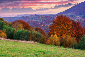 gorgeous purple dusk scenery of countryside. trees in fall colors. dominant red color of foliage. clouds on the sky above the distant ridge. green grass in the hillside meadow. beautiful carpathians