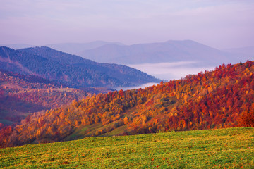 Photo sur Plexiglas Lilas misty autumn mountain landscape at dawn. forest on hills in fall foliage. distant valley full of fog. amazing carpathian landscape.