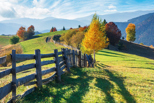 beautiful rural area in autumn. wonderful autumn landscape. trees on the grassy field on hillside. wooden fence along the road in to the distance