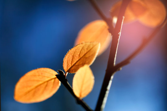 Autumn yellow leaves on a branch lit by bright sunlight.