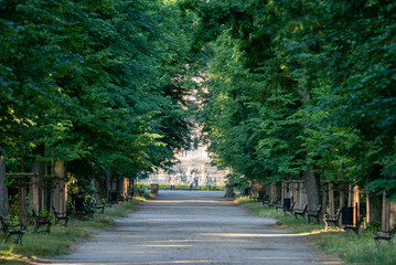 avenue of trees leading to the castle