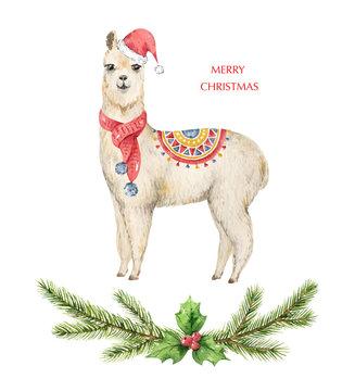 Watercolor vector Christmas card Llama or alpaca and fir branches.