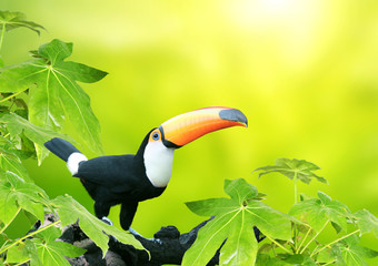 In de dag Toekan Beautiful colorful toucan bird