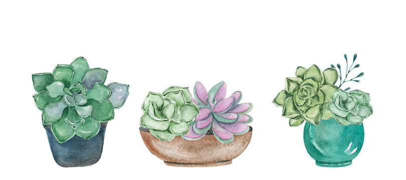 Set of watercolor hand-drawn illustrations with succulents in pots. Watercolor graphic for fabric, postcard, wedding or greeting card, book, poster, tee-shirt, banners, emblems, logo. Illustration, is