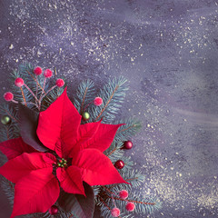 Christmas flower poinsettia and decorated fir tree twigs on dark