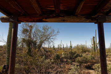 Desert Discovery Nature Trail in Saguaro National Park