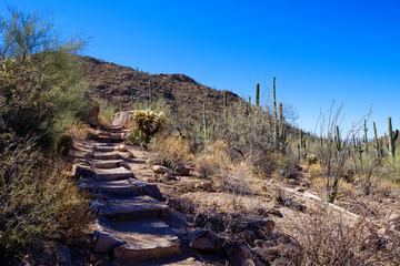 Trail through Saguaro National Park