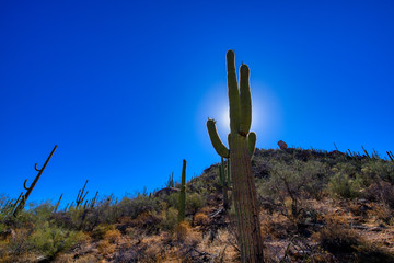 Silhouette of a saguaro cactus in Saguaro National Park