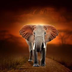 Tuinposter Olifant Elephant on savanna landscape background and Mount Kilimanjaro at sunset