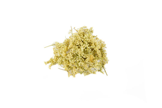 Dried herbal medicine Filipendula ulmaria, meadowsweet or mead wort, queen of the meadow, pride of the meadow, meadow-wort, meadow queen,  dollof, meadsweet isolated on white, with lot of copy space.