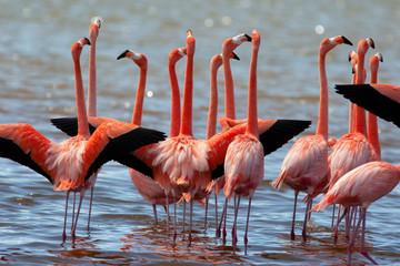 Garden Poster Flamingo Pink flamingo wading in pond