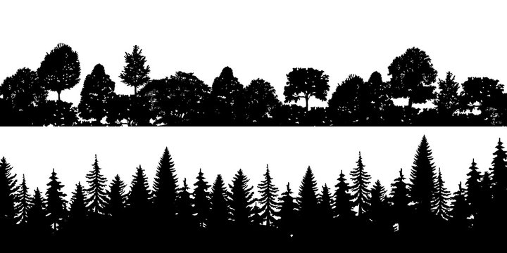 Set of black horizontal silhouettes coniferous treetops forest pine, spruce, cedar . Coniferous spruce panorama. Park of evergreen wood. Vector on white background EPS