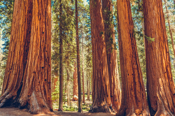 Sequoia National Park in California, USA