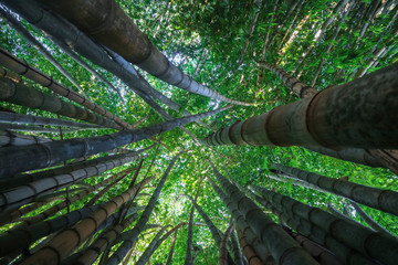 The infinity green of a bamboo forest.