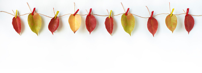 Autumn composition. Red and yellow autumn leaves hanging on a clothesline. White background, free space for text.
