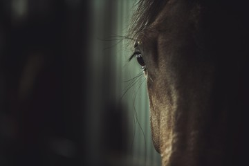 Dark Horse Eye Closeup