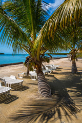 Palm trees and chairs in Belize