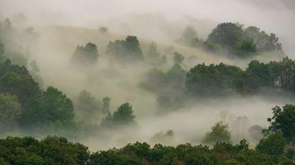 Fog over the landscape