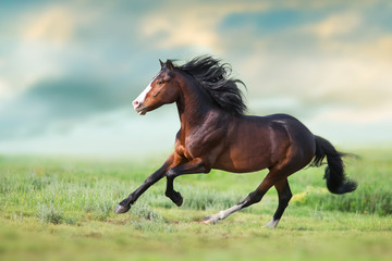 Spoed Foto op Canvas Paarden Horse with long mane close up run on green field