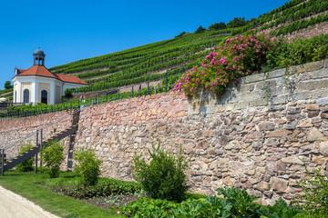 Vineyards near the Castle Wackerbarth, Dresden, Germany