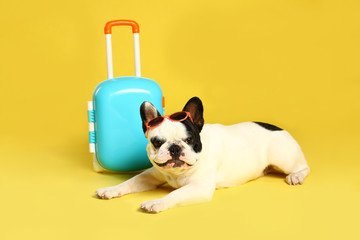 French bulldog with little suitcase on yellow background