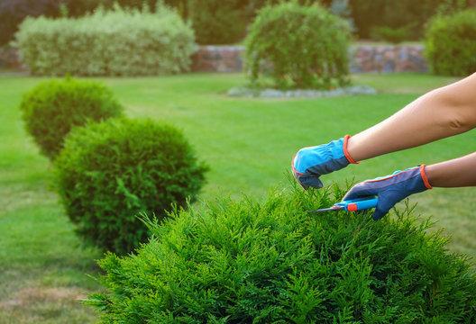 Woman trimming green bush outdoors, closeup. Home gardening