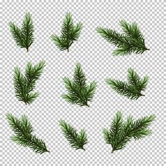 Fototapeta Set Christmas tree isolated on white background, pine fir branches. obraz