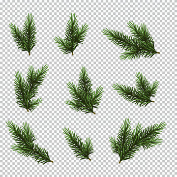 Set Christmas tree isolated on white background, pine fir branches.