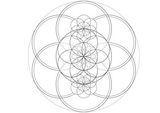 Seed of life mandala vector illustration